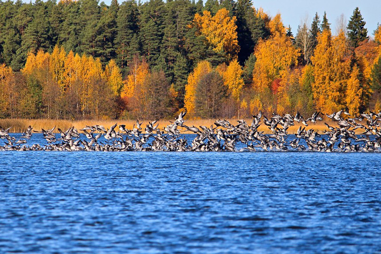 http://e-finland.ru/media/images/img_11/2273-birds.jpg