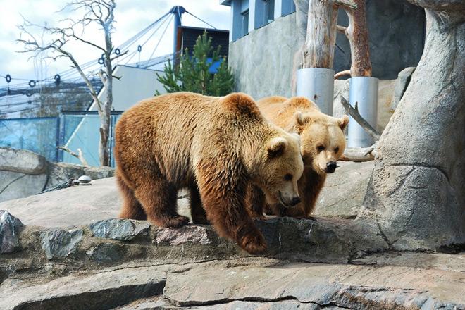 Реклама ok google зоопарк картинки яндекс директ на поиске